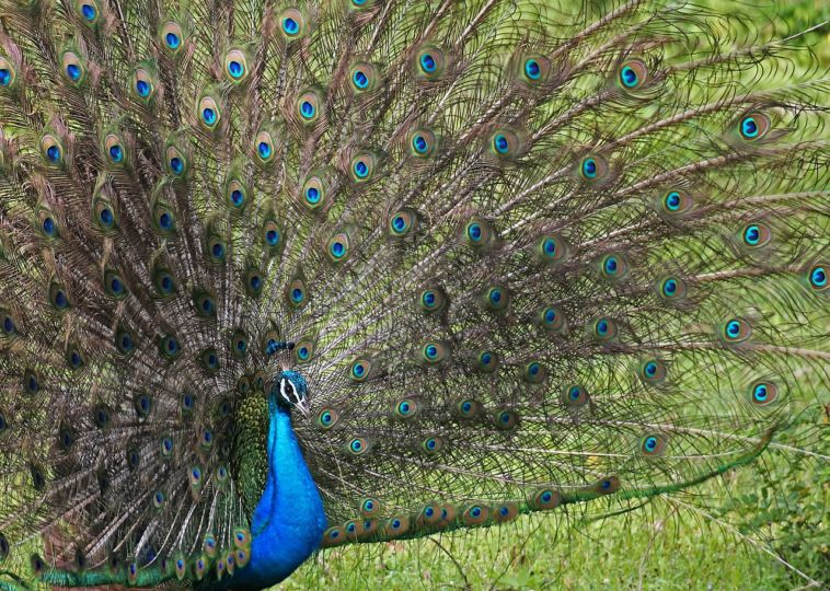 Top 5 Amazing Vivid Creatures on Earth
