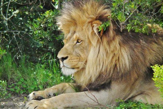 Top 5 Astonishing Wildlife Destinations on Earth