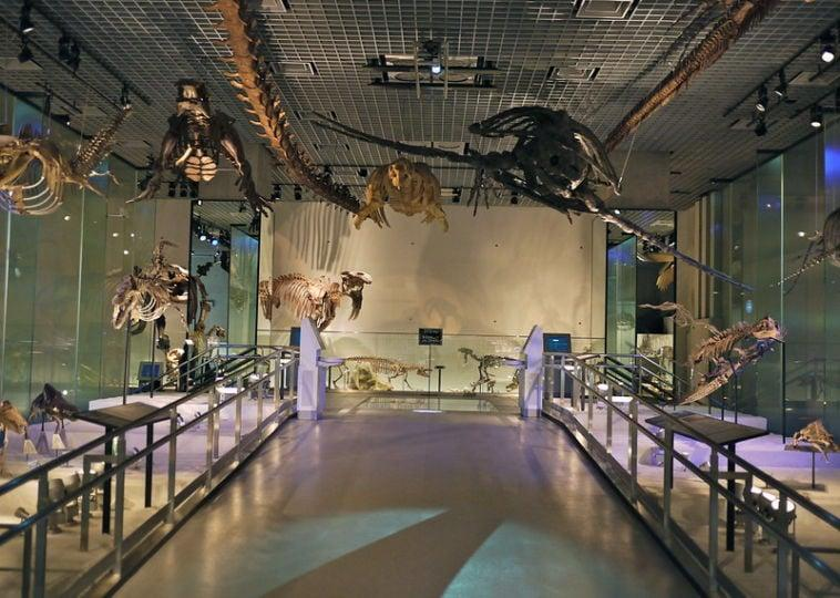 National Museum of Nature and Science