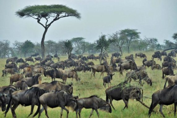 The 5 Most Excellent Safari Destinations in Africa