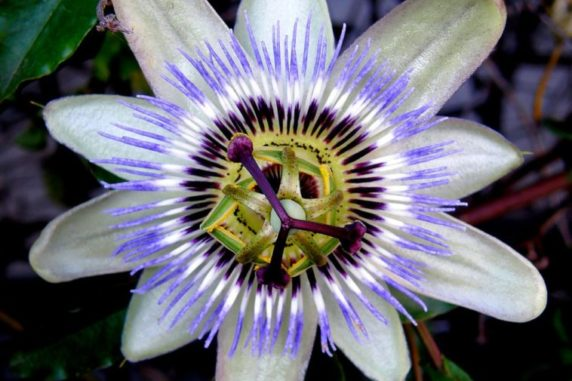 5 Extraordinary Flowers You Have Probably Never Seen