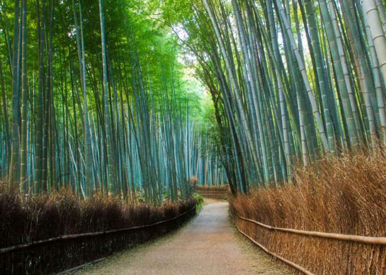 Sagano Bamboo Forest, Japan