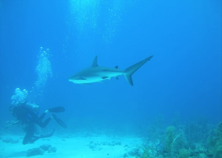 Snorkel in Bora Bora