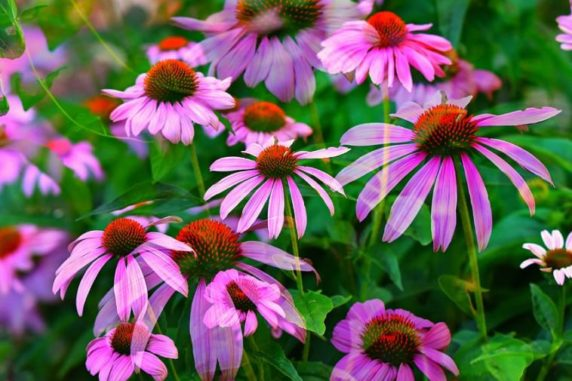 5 Marvelous Healing Medicinal Plants