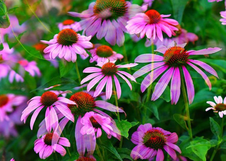 5 Marvelous Healing Medicinal Plants