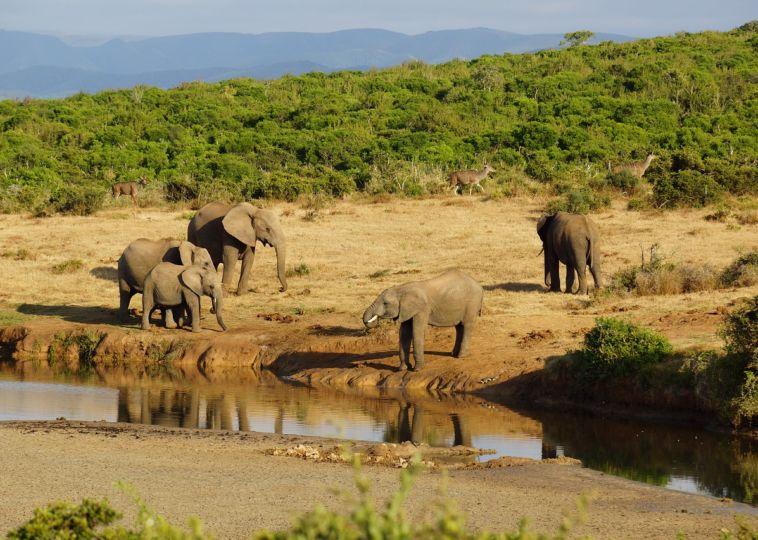 Get A Safari Holidays