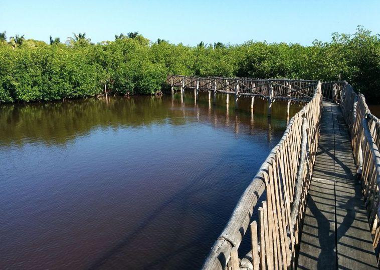 Caye Caulker Forest Reserve