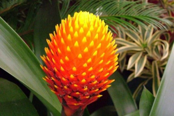5 of the World's Most Unusual Plants
